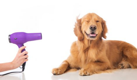 Raleigh Dog Grooming