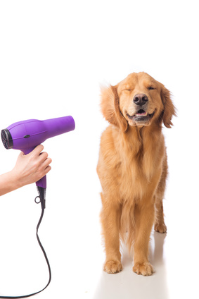 Raleigh Dog Grooming