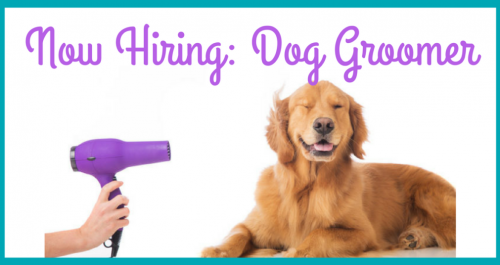 Now-Hiring_-Dog-Groomer-1024x536